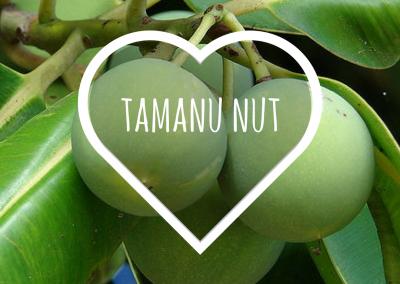 Tamanu Nut