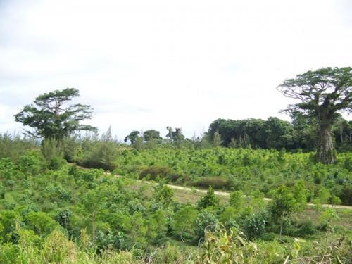 the-summit-plantation-2