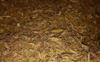 Golden Wood for Golden Oil. #Sandalwood